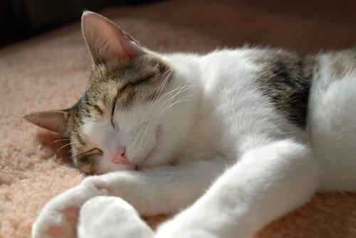 光看就想睡的貓特集5