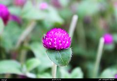 البنفسجي (Abdullah Al_Hammad (Abu-Hammad)) Tags: الحيوانات حديقة الملز