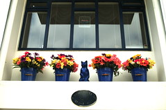 BLUE CAT (marc falardeau) Tags: street flowers blue vacation window june cat colours ruk houseproud icleand