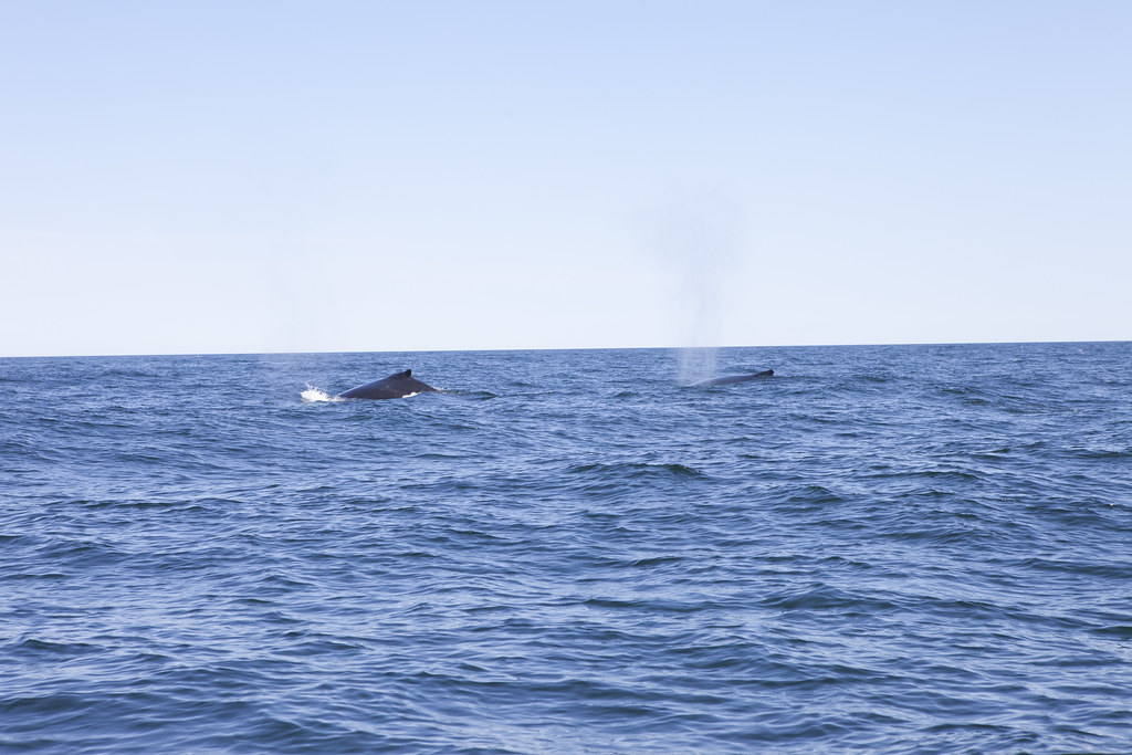 Canadian Whales!