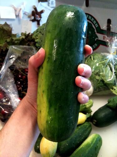 fat cucumber
