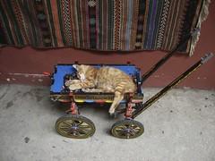 Ricordi di viaggio: un gattino che dorme al souk d'Istanbul