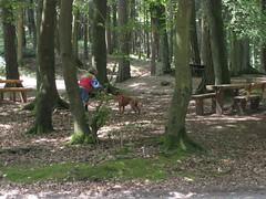 GoSniff, Juni 2010 (Cave Cani) Tags: seminar hunde hundeschule suchspiel hundetraining hundeerziehung nasenspiel nasenwelt gosniff nasenarbeit sucharbeit hundetrainingteamarbeit