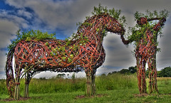 Man and Horse HDR (Marc Emond) Tags: uk horse man cornwall olympus e300 wicker hdr marcemond