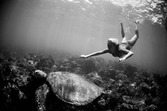 (Micah Camara) Tags: ocean sea bw white playing black girl swim happy turtle surfer honu playful encounter