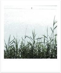 Sparkling light (Iro {Ivy style33}) Tags: softtones sparklinglight lakeflora photographythroughivyseyes swimmingatalake naturesstories