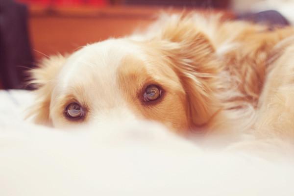 Maisie Snoozing 2