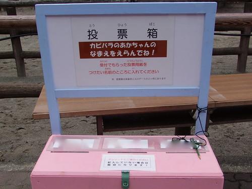 投票箱/Ballot Box