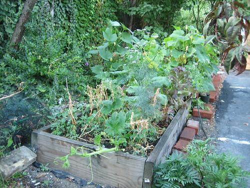 GardenMidJulyPumpkin