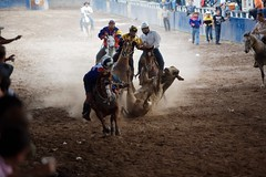 2008-01-26_MG_5295 (Ronald de Hommel) Tags: horses horse news game boys sport festival children fun cow cattle market animalrights balls fair bull racing parade ganado testicles abuse reportage raffles photojournalist contast documentaryphotography cattlefarming