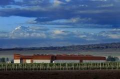 Arquitectura: Bodega Navarro Correas en Luján de Cuyo, Mendoza