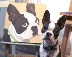 Zoe posing with herself ( Just me... ) Tags: portrait boston painting bostonterrier terrier