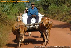 Countryside (daveperkes) Tags: road house cars countryside cow buffalo cambodia rice moto farmer cart shopkeeper childrent