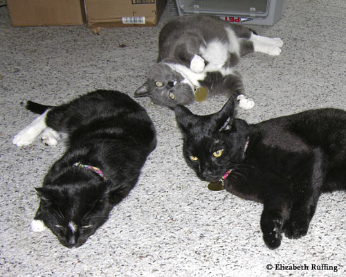 Kitties playing with catnip