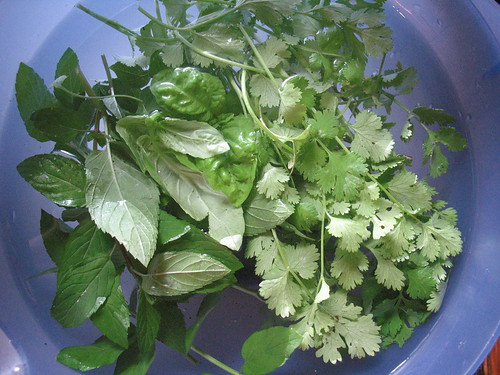 home grown herbs for spring rolls