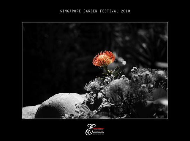 Flowers - 002