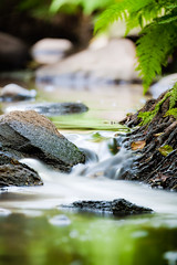 Creek (MitjaSchneehage) Tags: nature water creek wasser natur bach