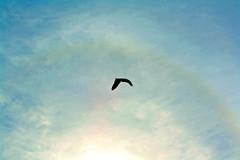 volar (As_yousaid) Tags: sol se ave cielo nubes caminar invierno feliz frio libre celeste tranquilo heladas profundo volar respirar recuperacion