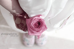 (3-7z ) Tags: pink flower for you             dm3t7zn