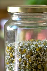 Soothing Winter Teas (Chiot's Run) Tags: tea jar herb glassjar chamomile driedherbs sandogmgmofreeworld