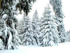 Thüringer Wald - Rennsteig - P3060064 (Andreas Helke) Tags: 2005 wood schnee winter white snow nature topv111 forest germany deutschland blurry lowresolution europa europe y fav lm wald weiss picnik 0306 rennsteig promote lc20 candreashelke worldsfavorite thüringerwad 2006031111 landscapeformat 2006051829 haslargesize donothide oldstileoriginalsecret 200801211811 200811142672 3x4l popularold upload2010 landscapeformatfavorited