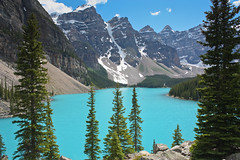 Moraine Lake Vista (Ada Be) Tags: blue trees canada mountains turquoise wildlife glacier alberta banff wildflowers wilderness lakelouise moraine banffnationalpark morainelake