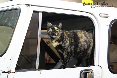 199-jeep kitty