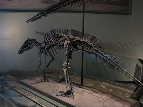 Maiasaura Calf