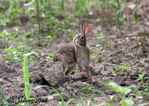 """Funny Rabbit"""