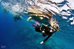 Turtle and Erika (Lea's UW Photography) Tags: underwater turtle redsea fins schildkröte unterwasser tokina1017mm canon7d leamoser