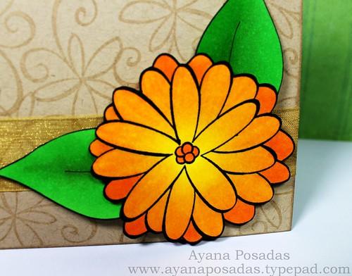 JudysBloom Orange (3)