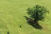 sheep in the shade (kosova cajun) Tags: summer tree landscape highlands pasture shade kosova kosovo pastoral vera dele kosovë rugova peisazh bogë rugovë bjeshkëtenemuna accursedmountains bjeshkë albanianalps alpetshqiptare hijje