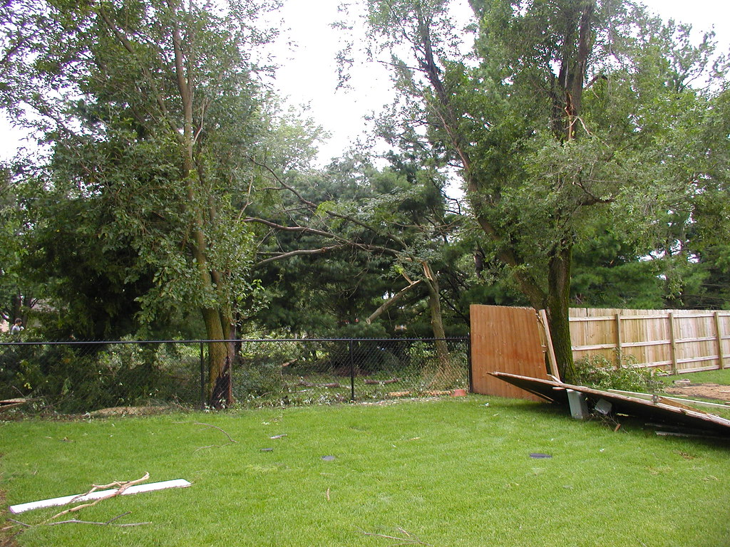 More tree damage