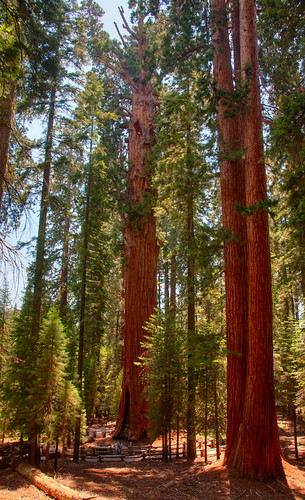 Sequoia National Park 12
