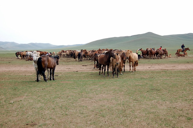 Bogd Khan 博格達汗山