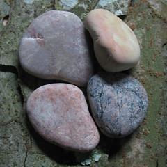 circle of hearts (WalrusTexas Offline) Tags: stilllife abstract macro texture stone pattern bark lichen fracture naturemorte earthtone chineseelm