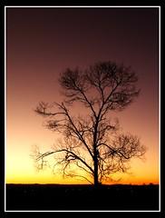 Moments Away (CrossEyedCat) Tags: sunset qld late lonetree burpengary platinumheartaward
