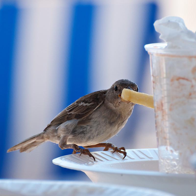 Der Pommes-Dieb / Chips thief
