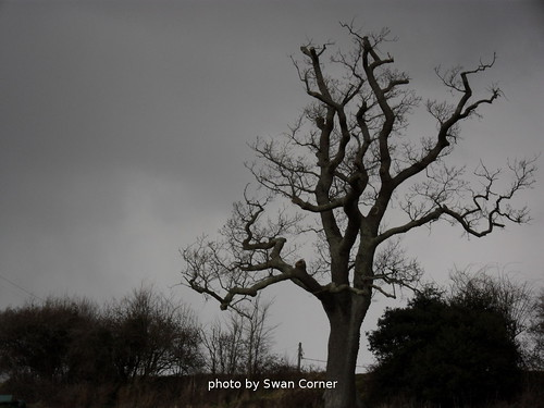 Tree oulined against grey sky