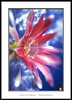 Resplandor (Jose Luis Mieza Photography) Tags: flowers flores flower fleur fleurs flor magnifica benquerencia florews reinante jlmieza reinanteelpintordefuego joseluismieza