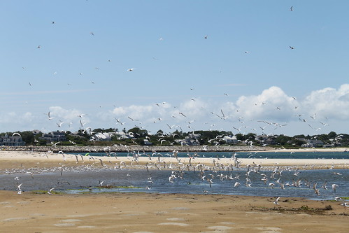 Cape Cod - Chatham Bars Inn - North Shore - Flying Terns