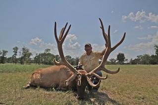 436 inch Bull Elk