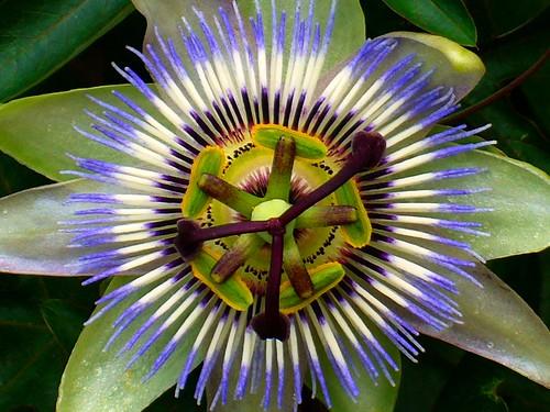 Un fiore musicale / A musical flower