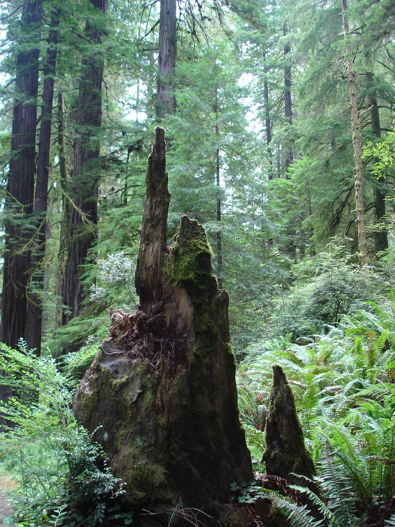 Five years ago: Redwood forest
