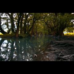 . (RVillar ) Tags: lake tree water méxico canon d50 arbol lago agua michoacán root 1022 raíces camécuaro rvillar ricardovillar