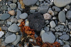 AK_4029_coal (jedibob) Tags: beach nature alaska outdoors rocks coal peninsula kenai cookinlet clamgulch