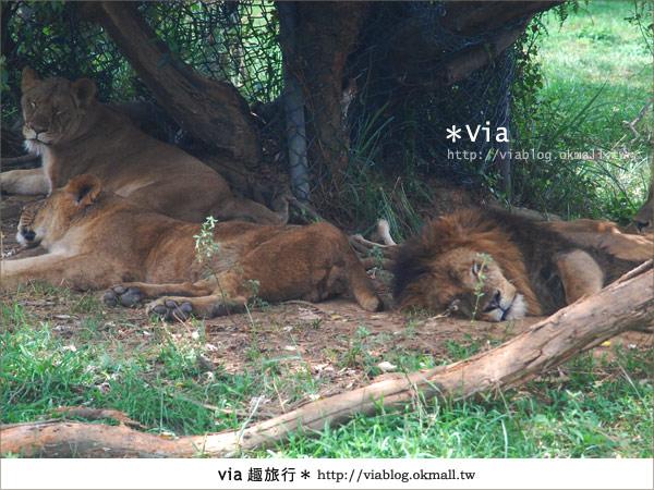 【關西六福莊】精彩秘探野生動物園/DIY手作/農趣樂~!24