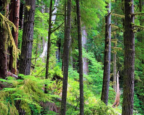 8x10 Redwoods IMG_7824