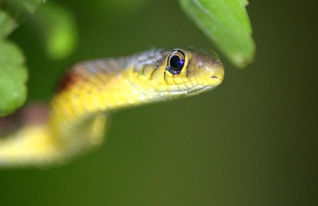 Tale of a Snake III