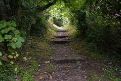 The Narrow Way (pni) Tags: uk light england tree nature leaves cornwall unitedkingdom path steps soil fowey stcatherinescastle skrubu pni uk10 manandenvironment pekkanikrus